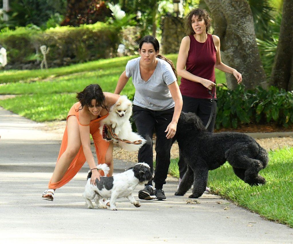 Shawn Mendes & Camila Cabello Struggle with their Dogs on a Walk (139 Photos)